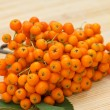 Fresh bunch of ashberry — Stock Photo