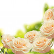 Floral background from roses — Stock Photo