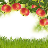 Fresh apples on garden background — Stock Photo