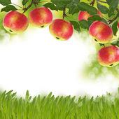 Fresh apples on garden background — Stock Photo