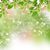 Flowers of apple tree on garden background — Stock Photo