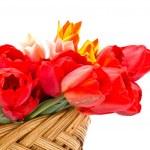 Fresh tulips in bucket on white — Stock Photo #24858605