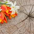 Bunch of bright flowers on wooden background — Stockfoto
