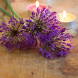 Fresh flowers of allium on wooden table — Stock Photo