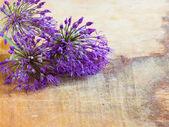 Fresh flowers of allium on wooden table — Stock Photo