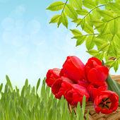 Bunch of bright tulips in bucket — Stock Photo