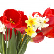 Stock Photo: Fresh tulips and daffodils on white