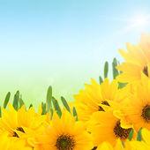 Blommig sommar bakgrund — Stockfoto