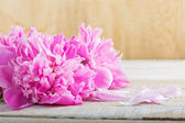 Fresh peony — Stock Photo