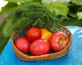 Świeże ekologiczne pomidory w wiadrze i kopru włoskiego — Zdjęcie stockowe
