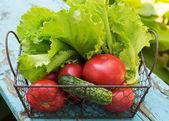 バケツの中の新鮮な有機トマト — ストック写真