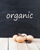 свежие органические яйца — Стоковое фото