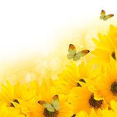цветочный летний фон — Стоковое фото