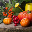 Fall decoration — Stock Photo #29196791
