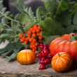Fall decoration — Stock Photo #29196801