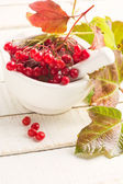 Berries of red viburnum — Stock Photo