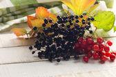 Elderberry and viburnum — Stock Photo