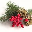 Spruce, berries, pine cones  — Stock Photo