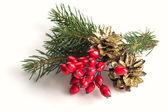 Spruce, berries, pine cones — Stock Photo