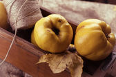 Fresh quinces and twine. Autumn postcard. — Stock Photo