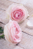 Postcard with pastel roses — Stockfoto