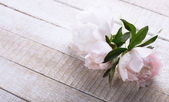 Postcard with fresh peony flowers — Stockfoto