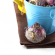 Flower bulbs, watering can, twine — Stock Photo