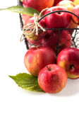 Fresh apples in metallic bucket — Stock Photo