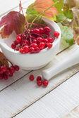 Berries of red viburnum in mortar — Stock Photo