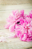 Postcard with elegant flowers peony — Stock Photo