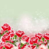 Elegant flowers and empty place for your text — 图库照片