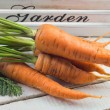 Fresh vegetables carrots — Stock Photo