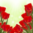 Fresh red tulips on green background — Stock Photo