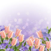 Postcard with fresh flowers tulips and periwinkle — Foto Stock