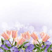 Postcard with fresh tulips and periwinkle — Stock Photo