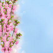 Postcard with fresh almond tree flowers. — Stockfoto