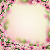 Fresh almond flowers on pink background. — 图库照片