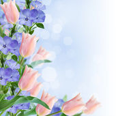 Flowers border from tulips and periwinkle — 图库照片