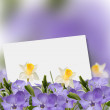 Spring background with periwinkle and narcissus. — Stock Photo