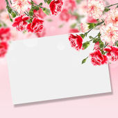 Postcard with carnation flowers — Stock Photo