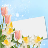 Postcard with fresh flowers narcissus and tulips — Stock Photo