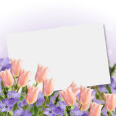 Postcard with fresh flowers tulips and periwinkle — Foto de Stock
