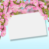 Postcard with fresh flowers almond — Stock Photo