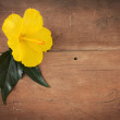 Yellow hibiscus on wooden background — Stock Photo #37714733