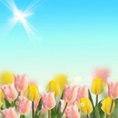 Pink and yellow tulips on sky background — Stock Photo