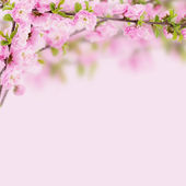 Postcard with fresh flowers almond — Stockfoto