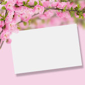 Postcard with fresh flowers almond — Stockfoto