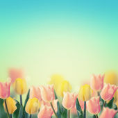 Fresh pink and yellow tulips background — Stok fotoğraf