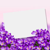 Postcard with fresh flowers crocus — Stock Photo