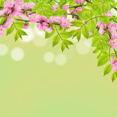 Spring leaves and almond flowers — Stockfoto